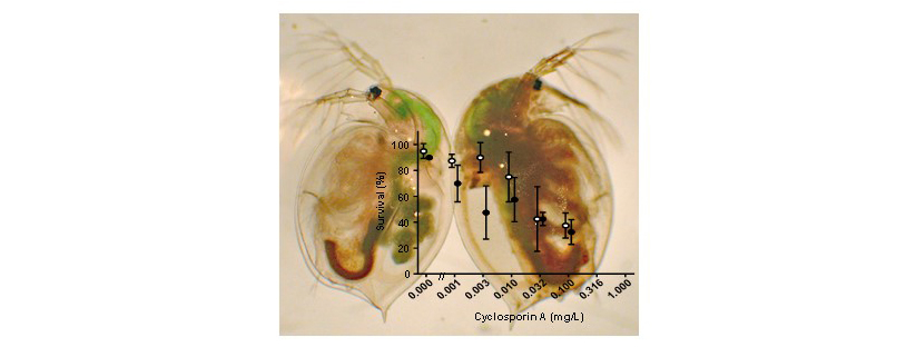 Impact of an immunosuppressive human pharmaceutical on the interaction of a bacterial parasite and its invertebrate host
