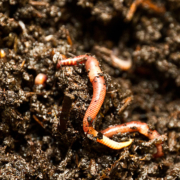 New developments in the toxicity testing of soil organisms – protecting soil biodiversity