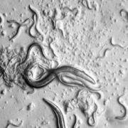 Effects of waste materials on Caenorhabditis elegans