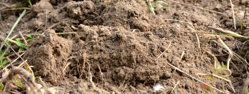PhD scholarship in soil microbial ecology within the ARISTO project