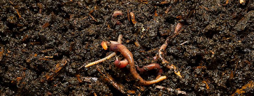 Global data on earthworm abundance, biomass, diversity and corresponding environmental properties